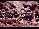 养殖蚯蚓视频