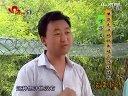 鹧鸪欢迎登陆:中国珍禽网视频
