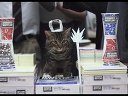 2013超级碗广告Dunder Mifflin - Paper War with Cat