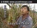 秸秆青贮发酵技术养牛饲料青贮技术视频