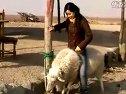 美女骑羊―专辑:《没时间整理了