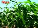 怎样种植蝴蝶兰和滴灌技术