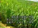 菌草栽培竹荪、灵芝、毛木耳、猴头、金针菇视频