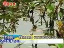 龙虾188金宝博官方直营网,如何养,养殖龙虾视频