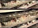 综合发酵床养鸡技术