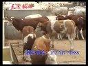 最新的肉牛养殖天宏牧业养殖视频