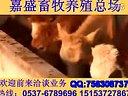 养牛技术肉牛疾病防治方法