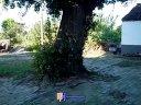 银杏树生长的地方2012视频