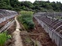 草莓种植培训视频