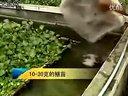 黄鳝健康养殖新技术-如何养殖黄鳝465989748