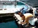 惠州小桂鱼排筏钓视频