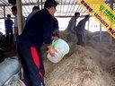 养鸭发酵床制作过程视频