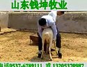 小尾寒羊188金宝博官方直营网发酵秸秆养羊技术