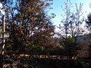 玉溪望月珍禽养殖场视频