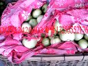 莱西小甜瓜(日本甜宝)日本甜宝种植