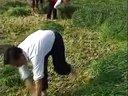 2004CCTV特高黑麦草的实验引进与推广视频