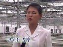 平壤大同江畔的养鳖厂视频