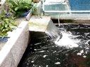 小锦鲤的鱼池视频