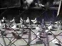 鸽子养殖李氏集团之李艺视频