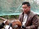 德保电视台记者到那甲乡承展七彩山鸡、土鸡生态养殖场采访纪录片