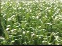 肉兔养殖技术-加2820054988(提供无公害饲养综合技术)