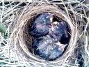 养鸟的历程视频