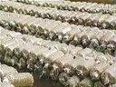 金针菇栽培技术2视频