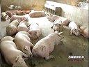 四轮驱动促进吉林畜禽养殖业发展