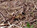稻田养殖青蛙视频