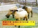 肉牛养殖rrtt肉牛养殖技术视频
