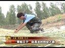 龙鑫青蛙养殖最新4视频