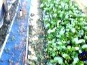 青蛙养殖技术-高密度养殖技术沅江市理想生态农业有限公司视频