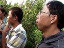 桃树秋季发枝条流胶怎么办---果农乐学习纪实视频