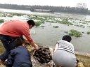 上海莘庄放生护生群2013年9月28日放生河蚌视频