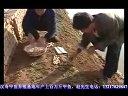 甲鱼养殖2视频