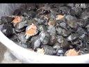水鱼苗价格,中华鳖批发,湖南洞庭湖甲鱼孵化养殖场直销