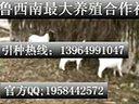波尔山羊养殖技术,波尔山羊公羊价格视频
