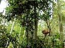 和甲®船场竹山鸡™(树杈上有只小母鸡)