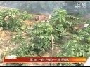 立体式青蛙养殖视频