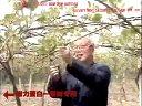 叶面肥增利蛋白水溶肥可冲施滴灌力增农业猕猴桃种植技术视频