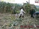 山西肉牛肉牛养殖视频