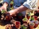 多肉植物组合盆栽方法DIY之长方形花盆视频