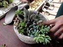 多肉植物组合盆栽DIY之方形花盆视频