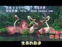结婚礼服裙子:婚礼主持小苹果视频广西南宁市震惊世界的婚礼开场歌曲结婚礼服