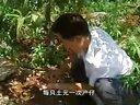 沂蒙全蝎(野外)养殖技术_标清视频