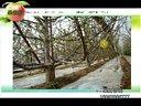 果树栽培学第11讲大樱桃整形修剪3(果农乐第25期2012118)视频