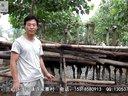 兰山区汪沟镇许家寨村鸵鸟养殖场视频