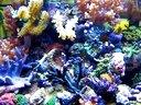 最强悍的水族箱,超过50种活珊瑚和鱼类视频