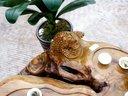 金丝楠木根雕茶几 茶桌 木雕茶台树头树桩树根茶海 家庭阳台