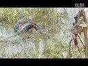 """高州长坡镇莲塘惊现""""大蟒蛇""""莲塘村主任五公,吊霸天!视频"""